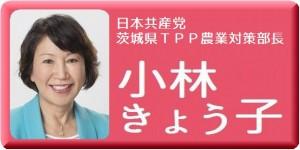 小林きょう子20170626